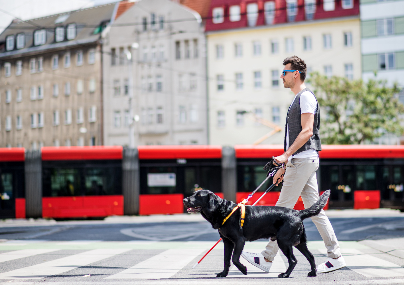 Side view of young blind man with white cane and guide dog walking across street in city.